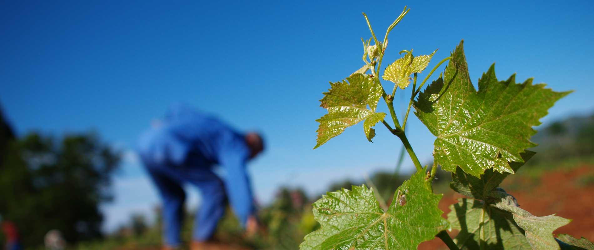 Agriturismo sulla Costa Etrusca